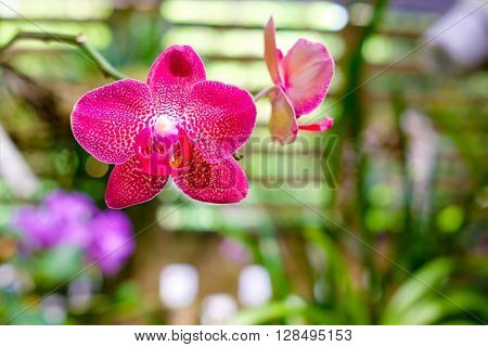 Beautiful orchid flower at the Soroa Orchid Botanical Garden in Cuba