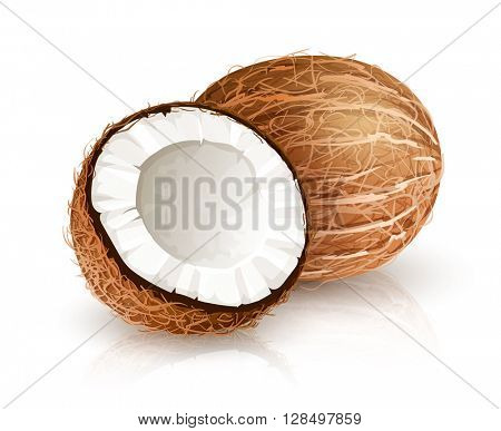 Coconut tropical nut fruit with cut. Vector illustration isolated white background