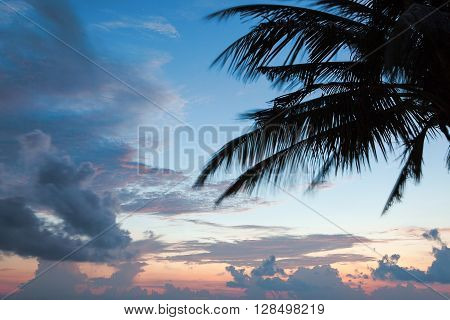 palm tree silhouette on sunset tropical beach Maldives island