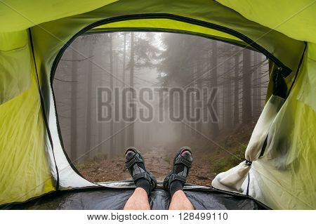 View from inside a tent on a fog in the haunted green forest in summer