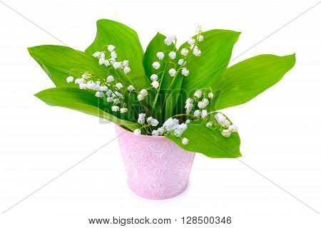 lilies of the valley isolated on white background