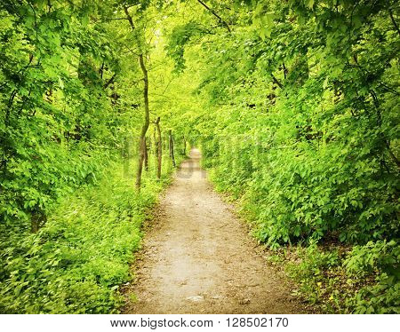 County road in forest