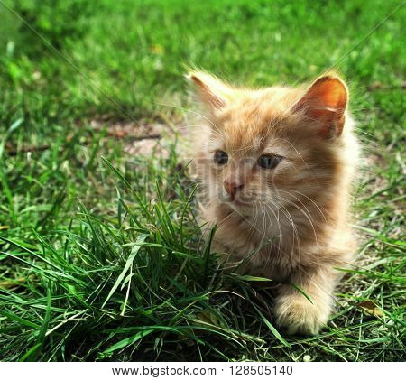 little kitten on green grass