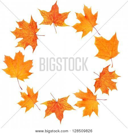 Autumn maple leaves shaped as round frame isolated on white