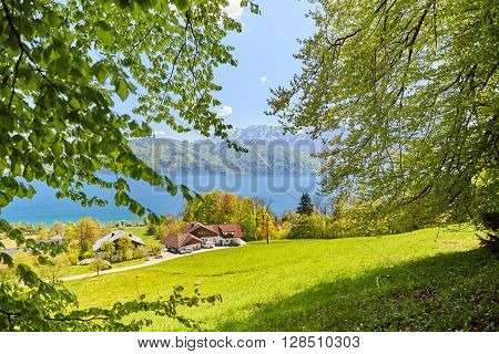 Leaves Of A Tree At Lake Attersee