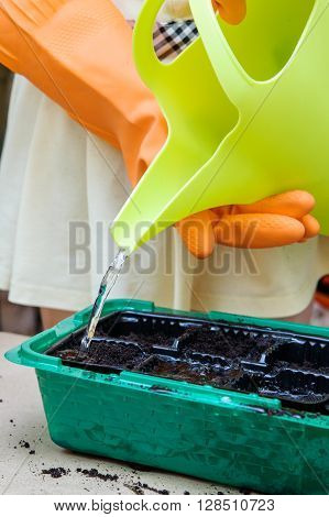 The stream of water flowing from a watering can. Leica holding hands in orange protective gloves