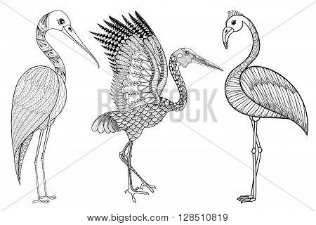 Zentangle Hand drawn Stork, Flamingo, Brolga for adult antistress coloring pages, post card, t-shirt print, fabric. Bird set illustration in doodle style, tattoo monochrome design. Animal sketch.