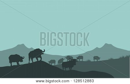 Bison silhouette in hills scenery a beutiful