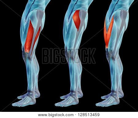 Concept or conceptual human upper leg anatomy or anatomical and muscle set or collection isolated on black background. 3D illustration