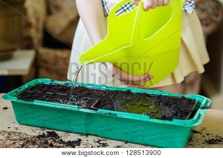 Girl pouring from a green watering can land in the green tray