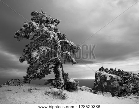 Black and white high contrast evening landscape with frozen pine tree on the edge and mountain rock with trees on the background