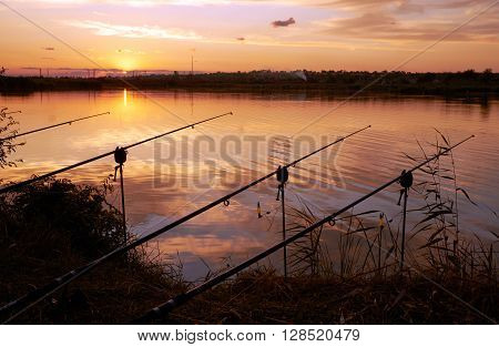 Four fishing rods on the riverside in the evening
