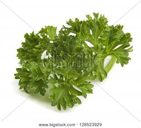 fresh sprig of parsley isolated on white background