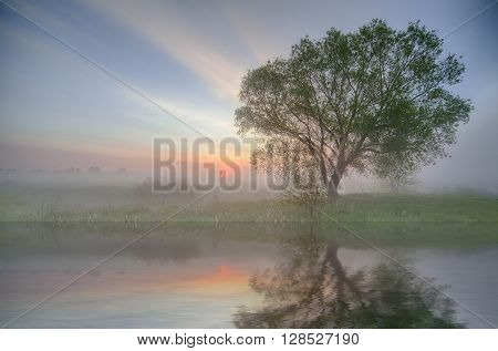 tree silhouette reflected in a lake. Nature