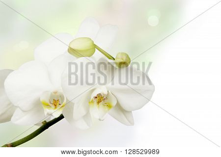 orchid flower on white background . Flower