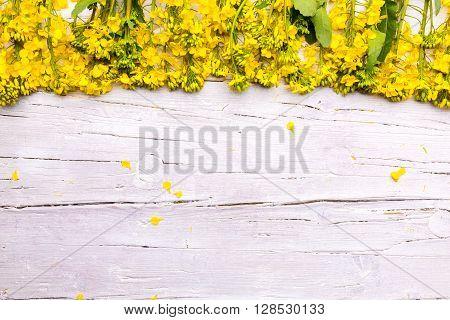 rapeseed on white wooden background as image background
