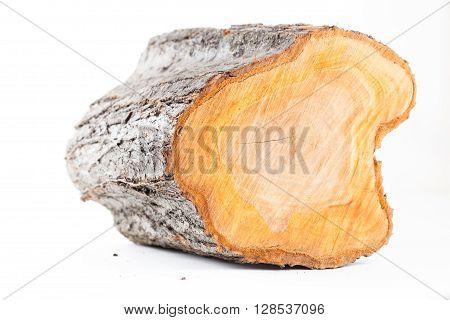 Isolated plum tree stub log on white background