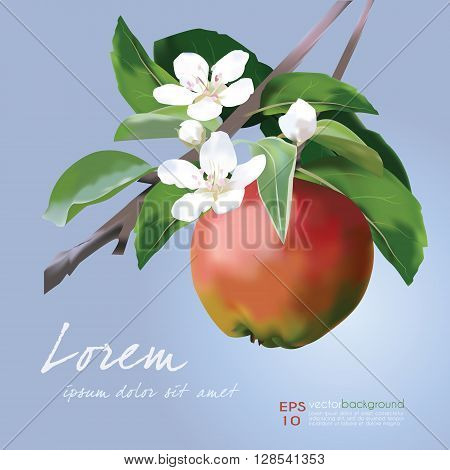 Apple Blossom and Fruit vector illustration. Floral banner for food and cosmetics package labeling, greeting cards, invitations, life events announcements, decals. Sample text. Editable