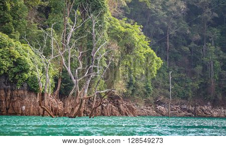 Decreasing of green water level inside dam which having green tree as background