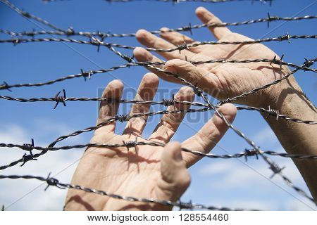 Hands In Barbed Wire