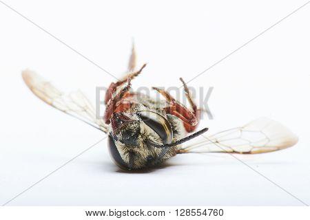 A Bee Upside-down