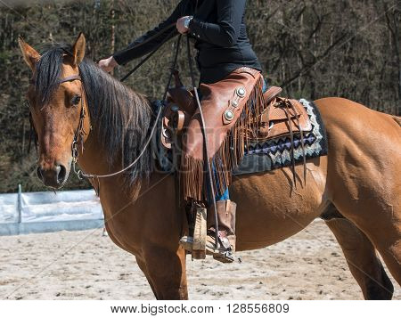 Horse with cowgirl with Rodeo equipment boots trousers saddle