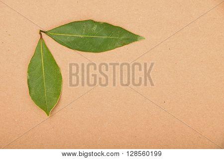 Two Bay Leaves On Kraft Paper