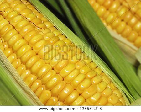 Maize the corn in Macro very close closeup.
