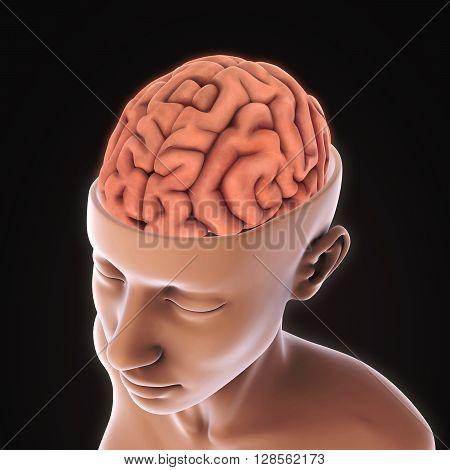 Human Brain Anatomy Illustration . 3D render
