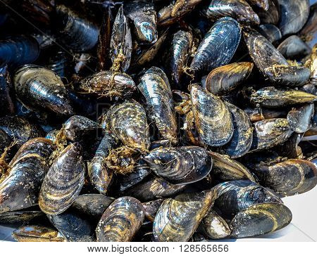 Fresh mussels exposed in market Naples Italy
