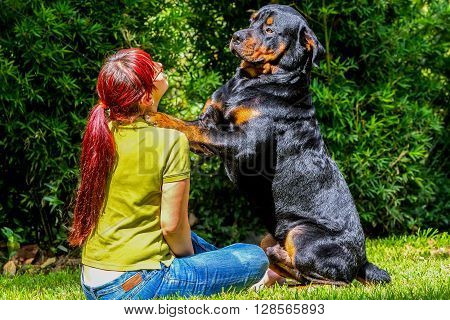 Young Woman And Her Best Friend Purebred Adult Rottweiler K9
