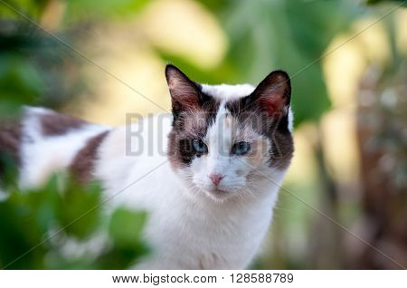 Close up of gorgeous kitty outdoors in nature with green plants in the background.