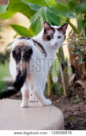 Close up of gorgeous kitty outdoors in nature with green banana plants in the background.
