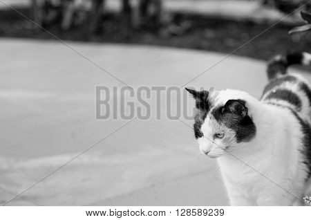 Cute cat outdoors in black and white with copy-space.