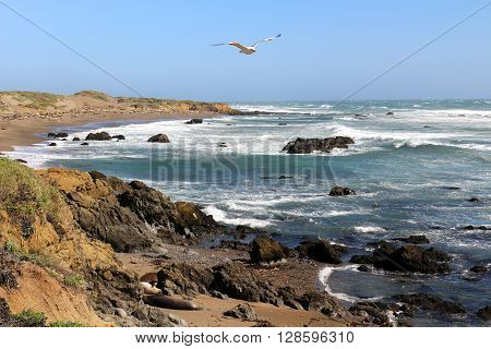 Beach at San Simeon, California with seals and natural beauty