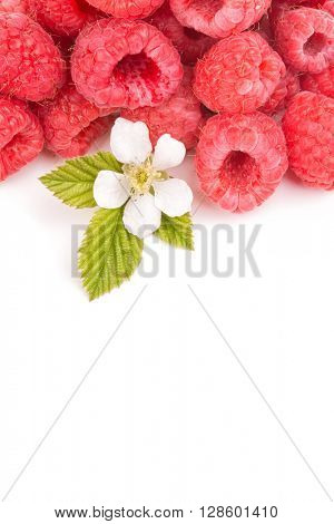 Raspberries with leaves and flower, on white with copy space