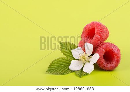 Raspberries with leaves and flower on bright green background