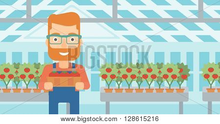 Farmer collecting tomatos.