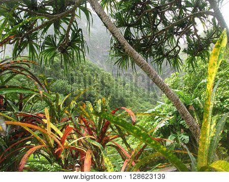 Colorful mountain rainforest on the island of Maui.