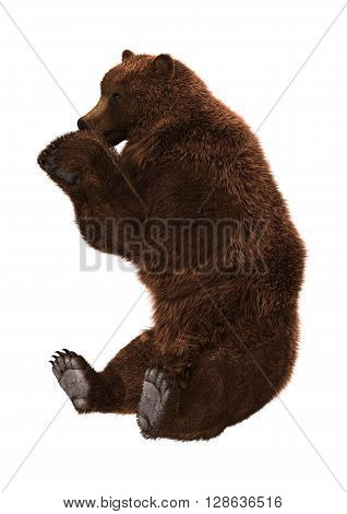 3D rendering of a brown Ursus bear sitting isolated on white background