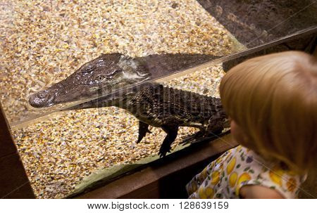 Girl Is Looking At The Black Crocodile Head In Zoo