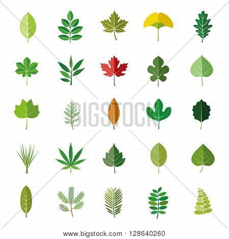 Set of leaves of plants or trees color vector icons