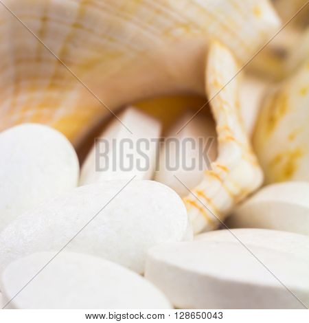 Calcium natural food supplement pills on the seashells background square image macro shot selective focus.