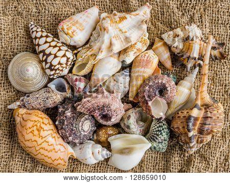 seashells on the sand of a beach