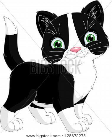 Cute little kitten on a white background