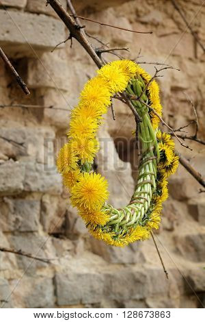 The wreath of dandelions on the stump of the old tree