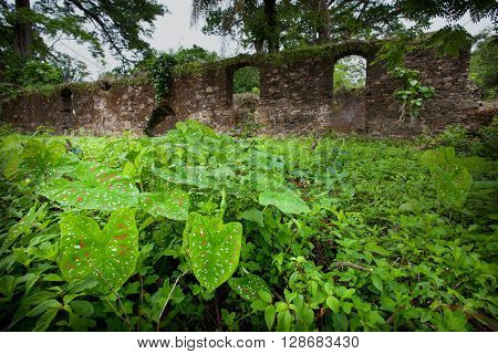 Sierra Leone, West Africa - June 2, 2013: the beaches of the Bunce Island, situated in Freetown Harbour, the remains of the walls of the castle of the slaves