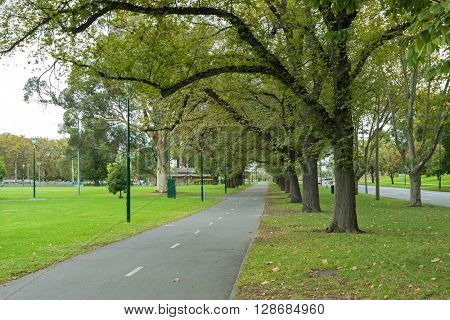 Row of big Elm trees and London plane tree along peaceful path at Alexandra Avenue, Melbourne St Kilda Road during Autumn in Melbourne, Australia
