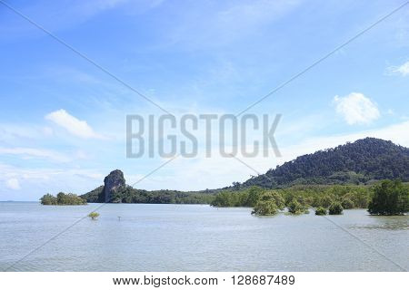 sea mangrove forest and island in sunny blue sky