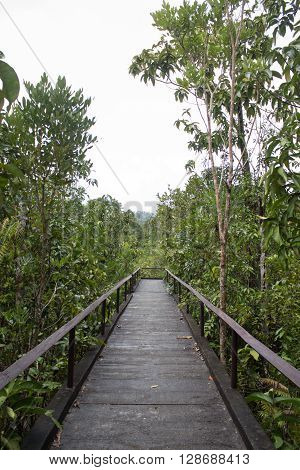 wooden bridge way in mangrove forest after raining